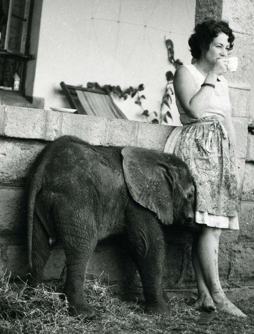 Elephant: