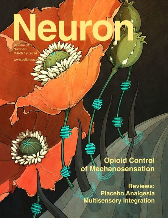 Current Issue: Neuron