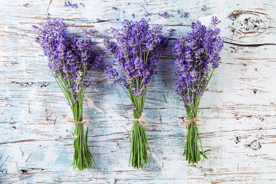 Para que Servem as Flores de Alfazema