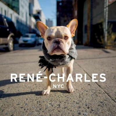 Rene-charles NYC: Little Bulldog in the Big City