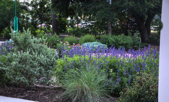 Lee Ann Torrans Gardening in Texas | June Perennials for Texas | http://leeanntorrans.com Hardy blues/cool colors
