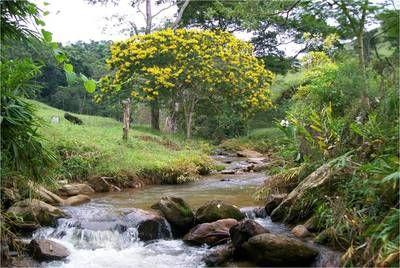 Blog de amigodasnascentes :Somos Amigos das Nascentes, Monografia do Córrego Cuiabá - Mariana - MG
