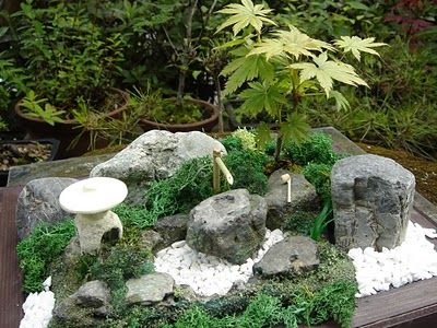 Miniature inspiration and design on pinterest for Jardin japonais miniature