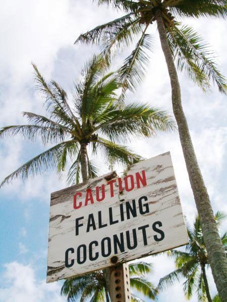 ココナッツ注意