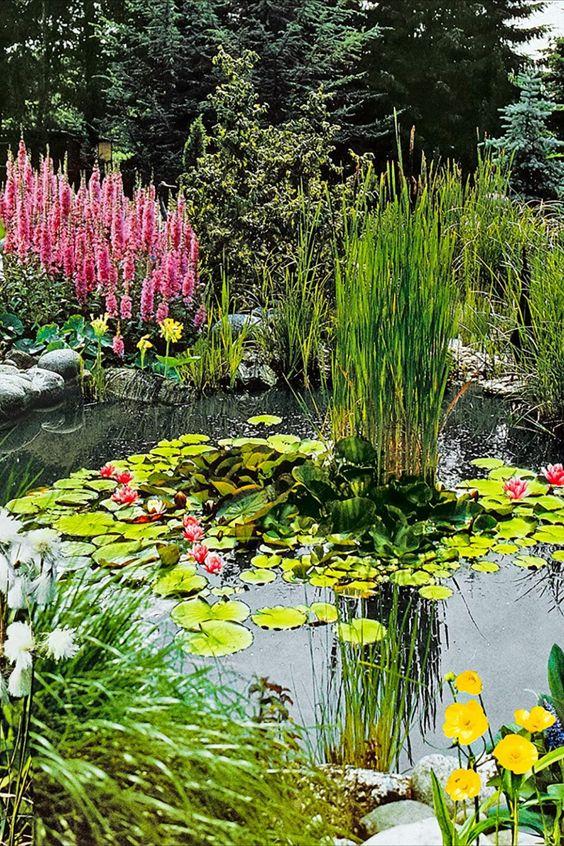 Die Pflanzenmischung besteht aus 3 verschiedenen Sauerstoffpflanzen. Die Pflanzen wachsen unter dem Wasser und reinigen das Teichwasser. So bleibt der Teich schön klar! Die winterfesten Pflanzen sollten im Frühjahr oder Sommer gepflanzt werden. EDie Sauerstoffpflanzen werden mit dem Teichkorb ganz in den Teich gepflanzt. Halten Sie eine Pflanztiefe von 50-60 cm ein. Stellen Sie die Pflanzen an einen sonnigen Standort. Ein klarer Teich wirkt direkt viel sauberer und... *Pin enthält Werbelinks