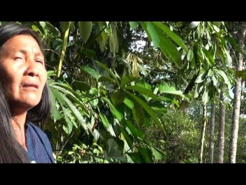 SAVE THE AMAZON: Support Indigenous Women to save Life and the Environment  Mujeres amazonicas se movilizan