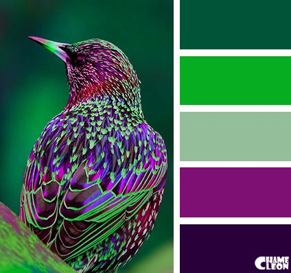 Beautiful Paint Colors And Birds On Pinterest