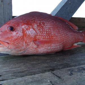 Como preparar peixe vermelho