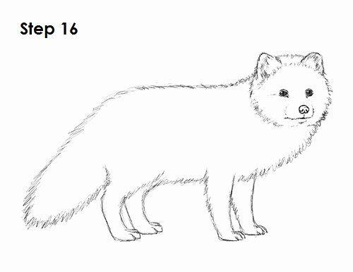 Arctic Fox Coloring Page Unique Arctic Fox Easy Coloring Pages Fox Coloring Page Fox Drawing Easy Fox Drawing