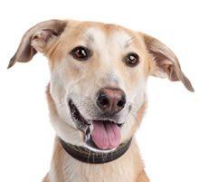 SRD, viralata, cachorro, cão, dog, puppy