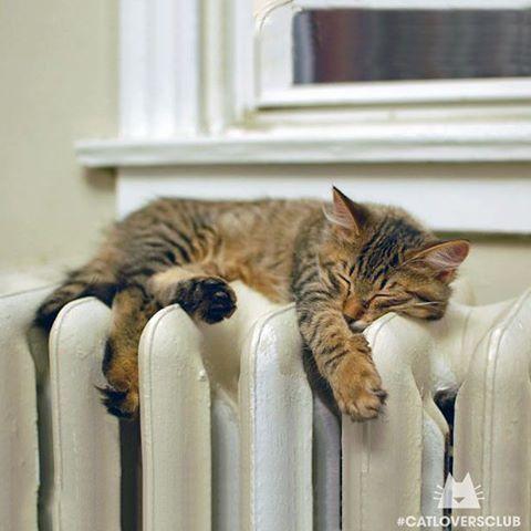 Do Cats Hibernate In The Winter Kittens Animals