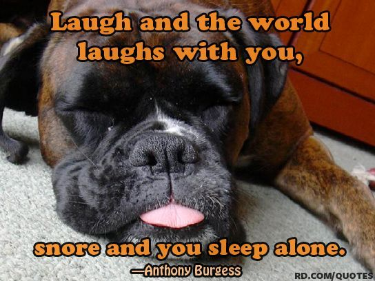 Let Sleeping Dogs Lie Idiom Leave Something Alone If It Might