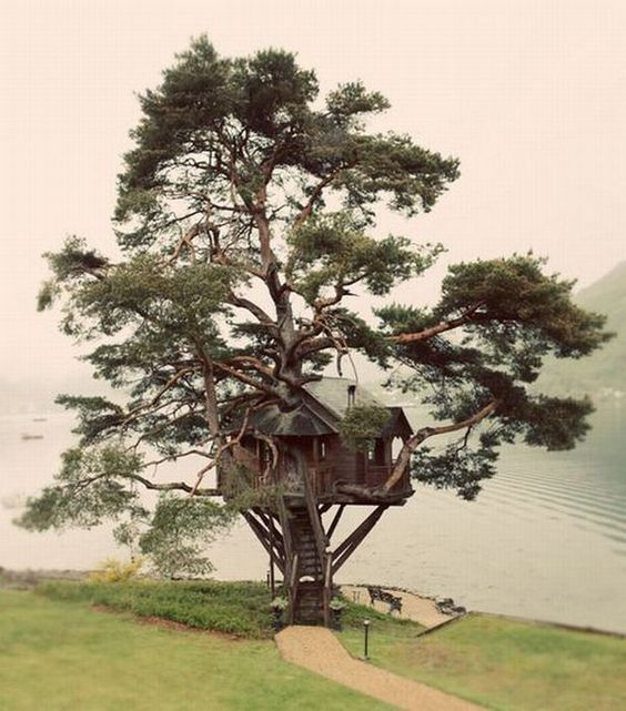 treehouse by the lake. too much to ask for?