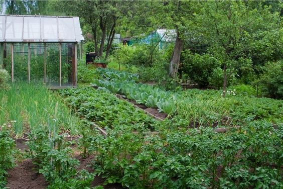 Growing Garden Vegetables