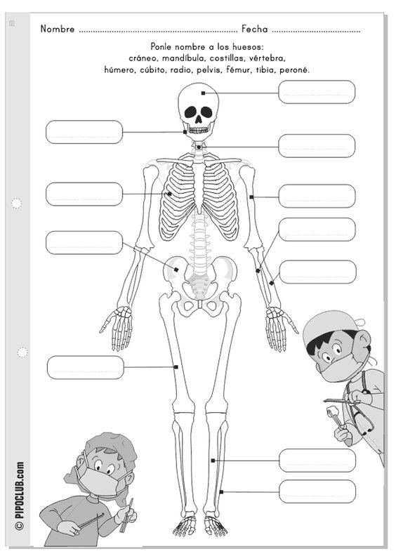 Los huesos - Colorea y escribe los nombres - Fácil - Primaria de El cuerpo humano con Pipo