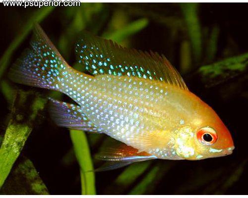 Todas las especies de peces de agua dulce peces de for Especies de peces