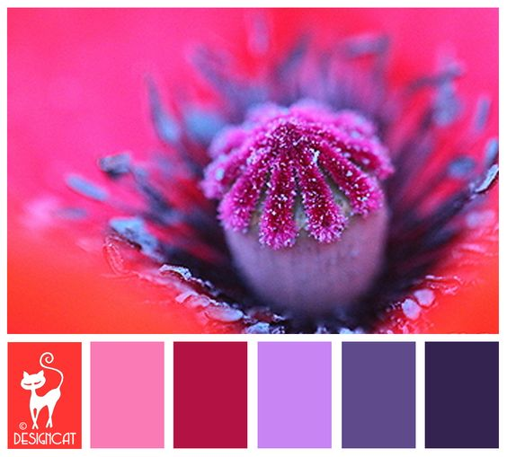 Poppy heart - Blue, Purple, Lilac, Hot Pink, Pink, Orange - Designcat Colour Inspiration Board