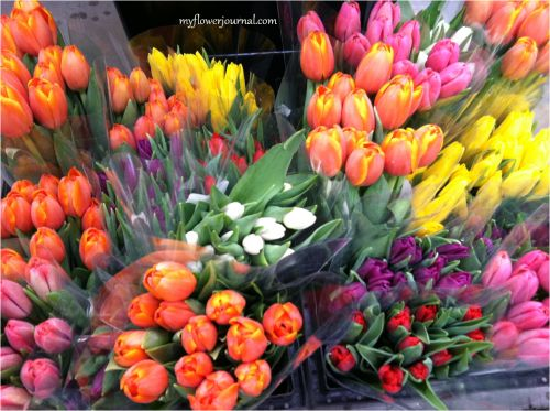 Flower Market Discoveries