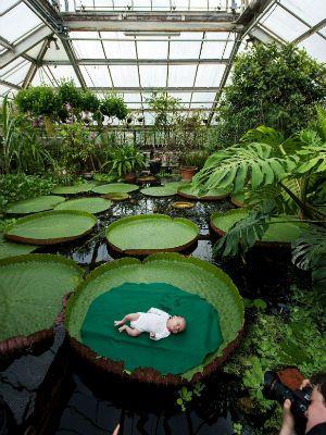 En el jard n bot nico hortus botanicus de leiden holanda for Informacion sobre el jardin botanico