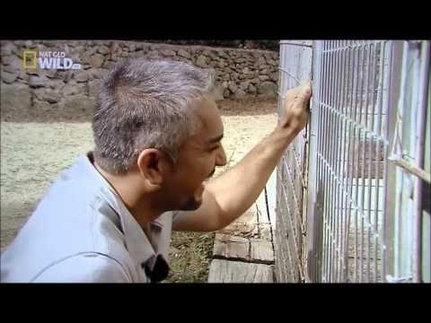 Cesar Millan conseils pratiques : Tapez: Dr.TG47 et découvrez des vidéos de César Millan - YouTube