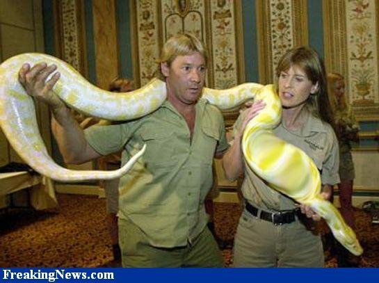 Steve Irwin Death Footage   Steve Irwin Death Video   Official Footage    YouTube espn  uverse