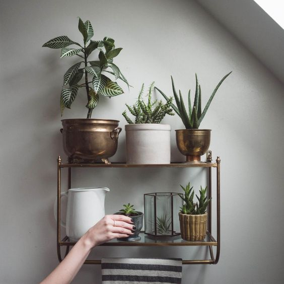 Indoor garden. Cute shelf with copper and gold plant pots. Perfect for flats and apartments with no garden space.