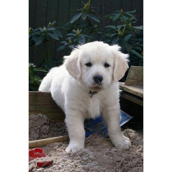 El top 10 de los cachorros más adorables | eHow en Español