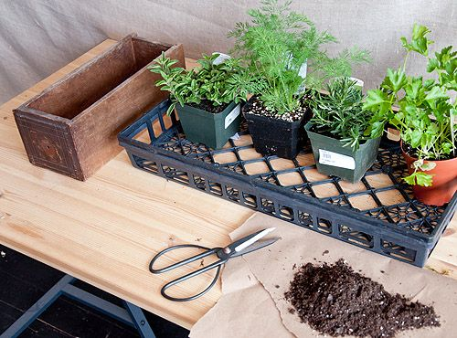 DIY KITCHEN INDOOR HERB GARDEN