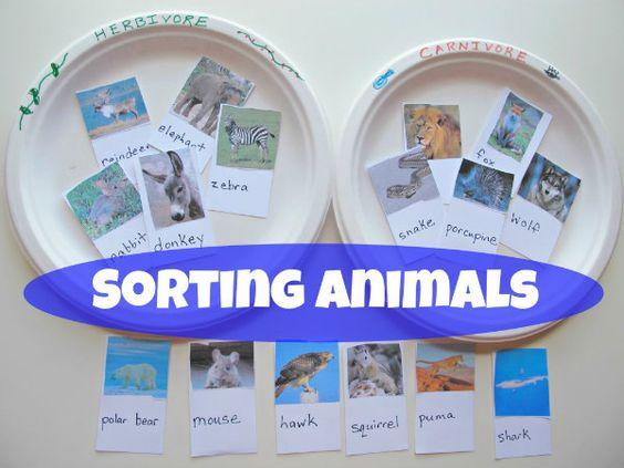 sorting animals