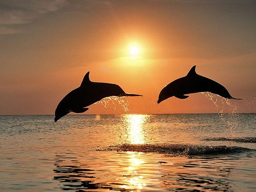 Dolphins Flying In The Air At Sunset Beach