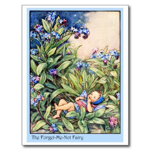 Forget-Me-Not Fairy Post Cards