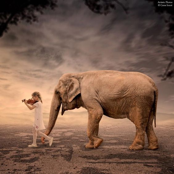 Les photomontages de #Caras Ionut