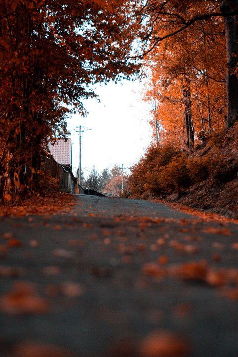 Vijay Mahar Road Picsart Editing Background Full Hd Blur Photo Background Photoshop Backgrounds Photo Background Images