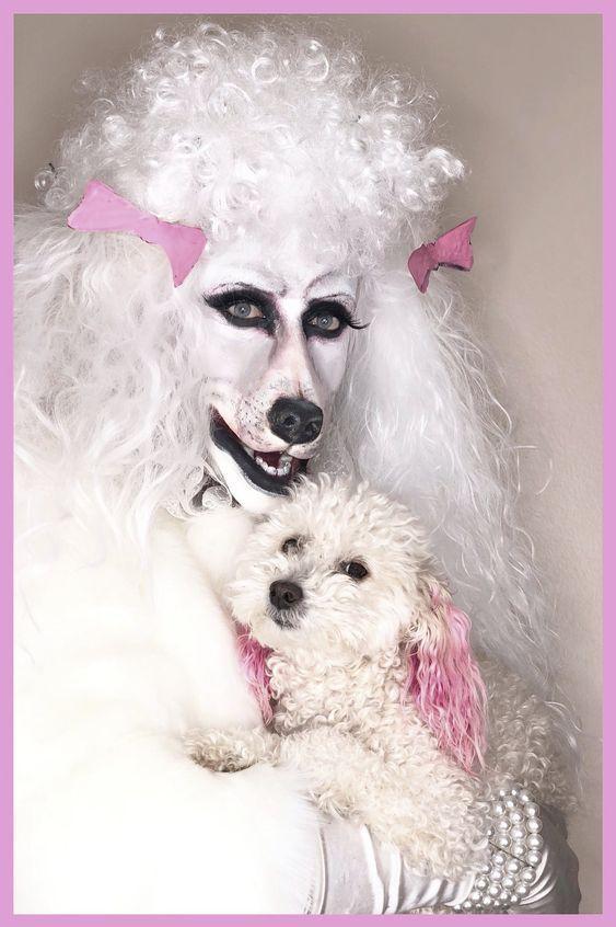 Nina Bo Nina Brown Pierre Leverne Dease Poodle Transformation 2018 Poodle Pink Dog Pink Poodle