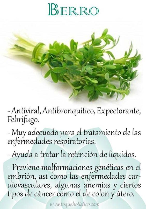 Propiedades del berro plantas medicinales pinterest for Manzanilla planta medicinal para que sirve