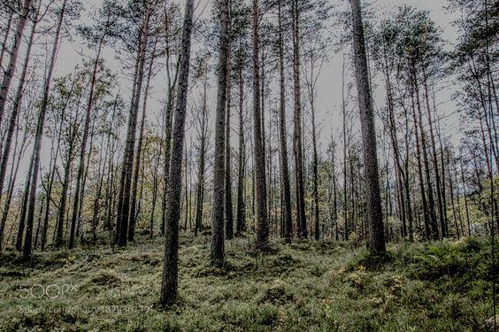 HDR Forest by larseivindbjoertvedt