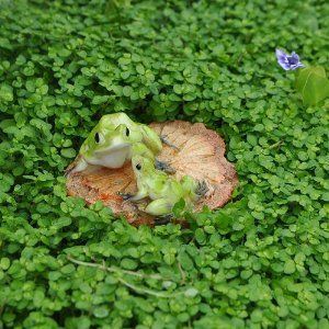 Amazon.com: Miniature Fairy Garden Frogs on a Wood Chip: Patio ...