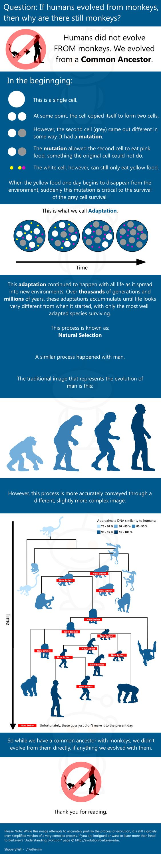 Evolution explained for all the creationists out there.  I wanted to use an expletive adjective but suppressed my desire.