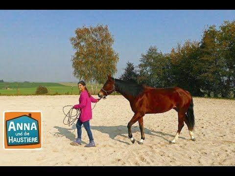 Mit Pferden Sprechen Information Fur Kinder Anna Und Die Haustiere 5 Youtube In 2020 Haustiere Wilde Tiere Pferde