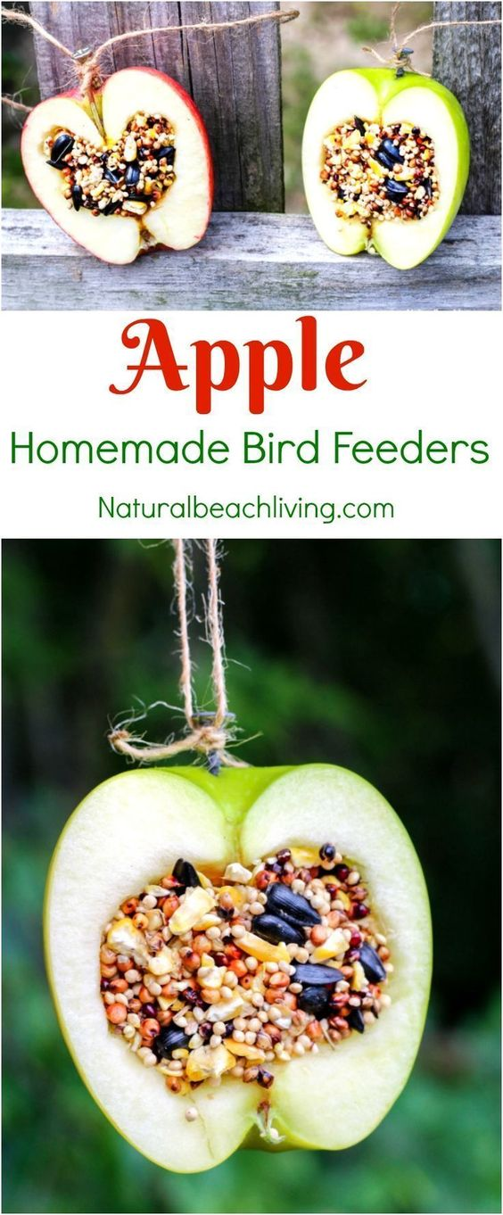 How to make a homemade bird feeder out of an apple! A fun kids craft to make, and then watch the birds together as a kids activity. #kidscrafts