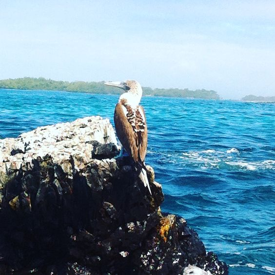 Galápagos