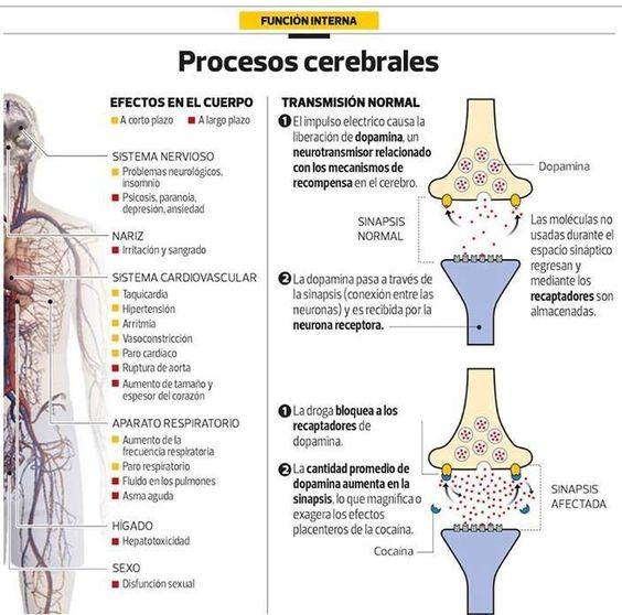Procesos cerebrales