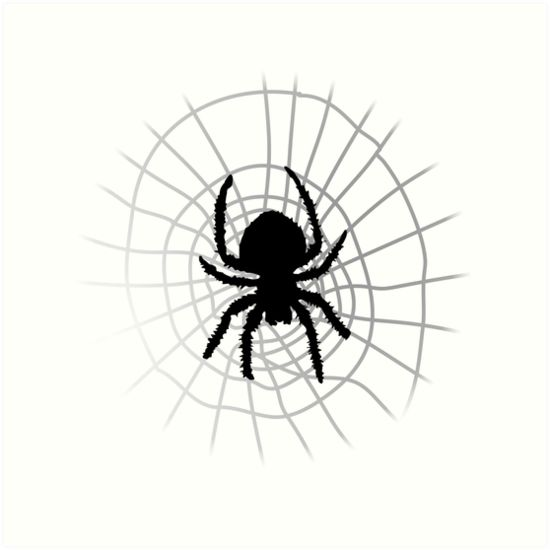 Spider and Web by Nathanael Mortensen