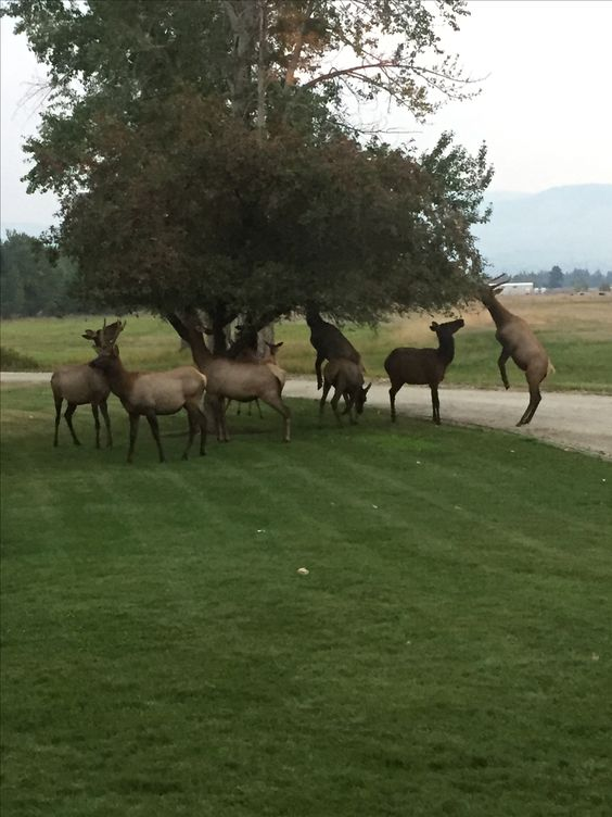 In my yard often. They love the crab apples.