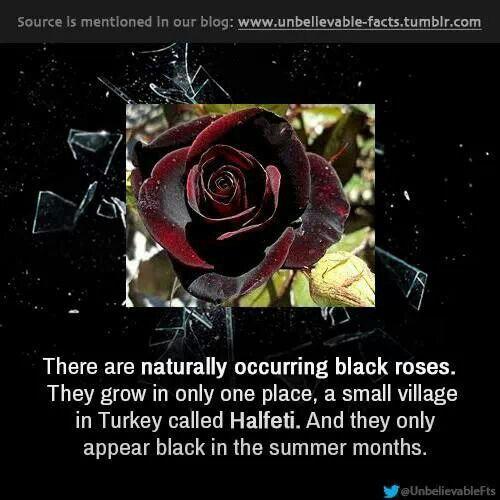 Natural, Black roses and Black - 42.8KB
