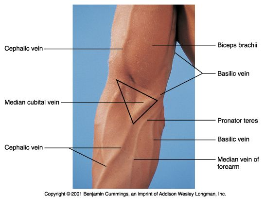 cephalic vein medical definition – gothing, Cephalic Vein