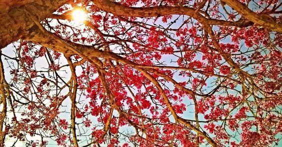 Internautas do UOL mandam fotos para celebrar o Dia da Árvore e a Primavera - Fotos - Meio Ambiente