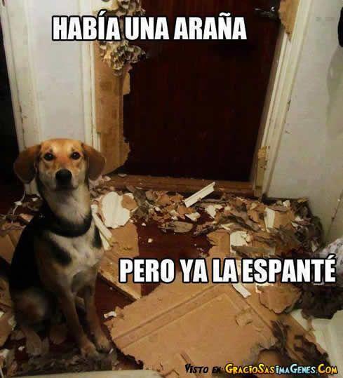 Perros Graciosos Http Enviarpostales Es Perros Graciosos 234 Perros Animales Dog Memes Relatable Meme Funny Memes