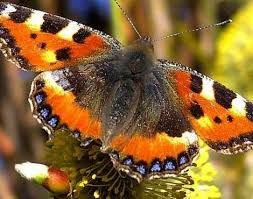 Image result for brightest butterflies