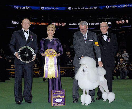 2014 WKC Dog Show - 2014 Winner of Reserve Best in Show Trophy - (runner up) WestminsterKennelClub.org